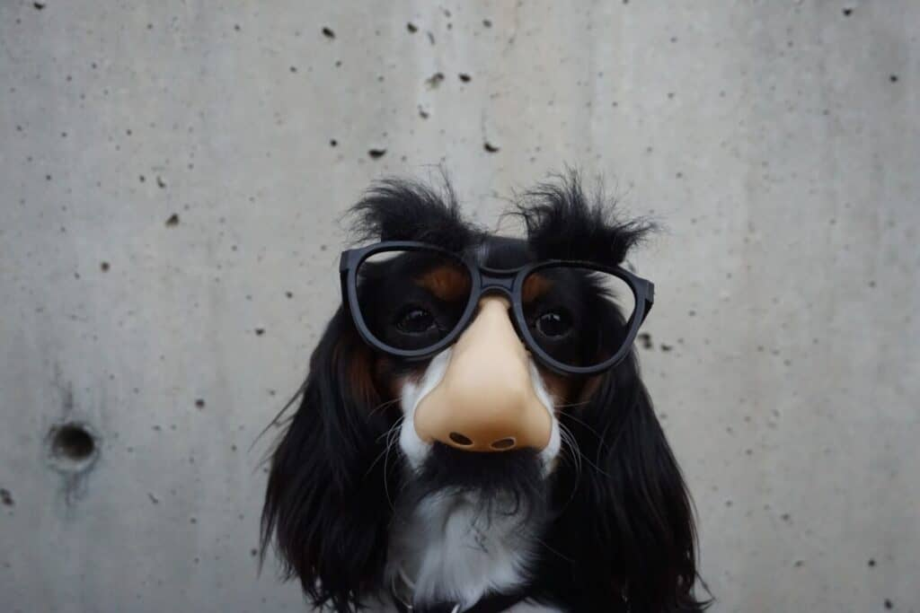 Dog-wearing-funny-mask-image-for-how-to-become-a-writer-for-SNL
