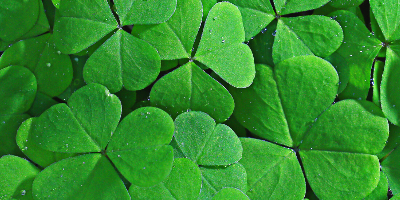 Four leaf clovers—How To Write an Irish Accent